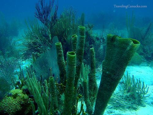 beautiful belize corals