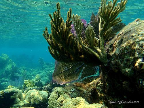 belize barrier reef system