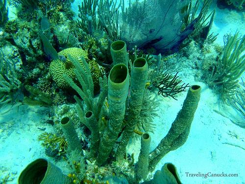 coral reef system belize