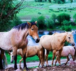 horse-tours