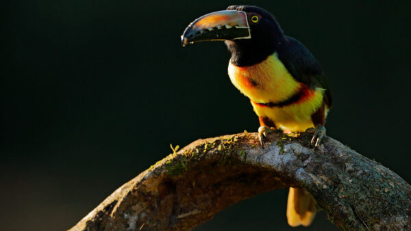 Belize Bird Watching Tours