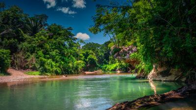 Belize Rainforests