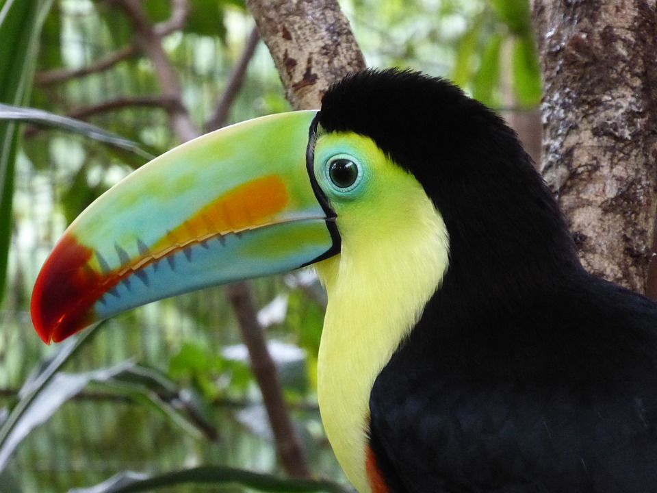 Belize Wildlife and Nature Vacations