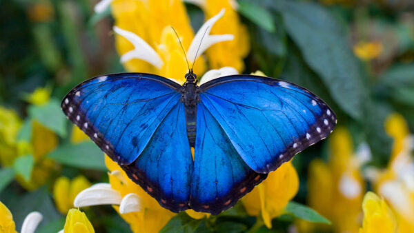 Blue Morpho Butterfly Farm