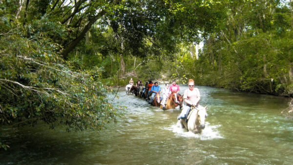 Jungle Horseback Riding Tours
