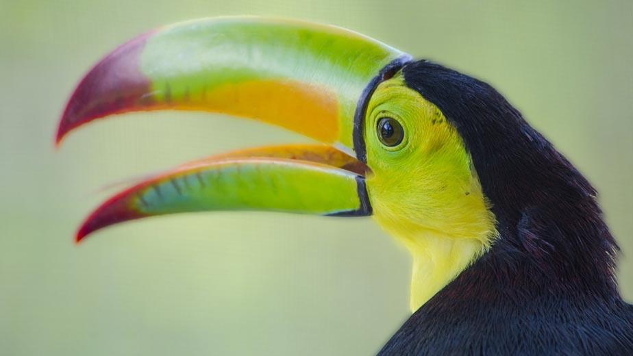 belize birding