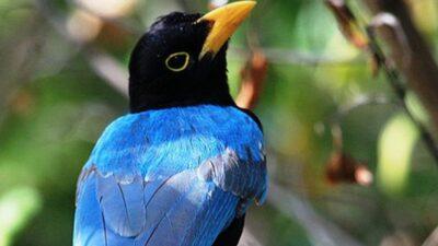 belize-birds